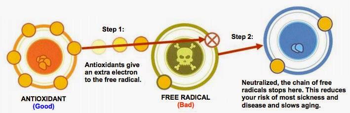 Bagaimana antioksidan meneutralkan radikal bebas.