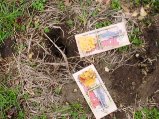 Vole traps supplies and more - Volle trap ...