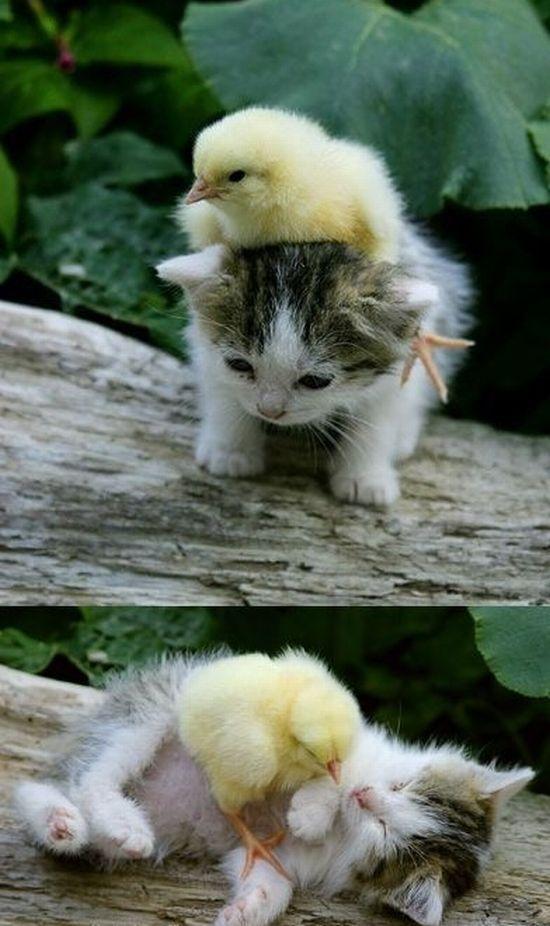 a verdadeira amizade