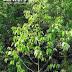 Inilah Tumbuhan dan Hewan Langka Indonesia