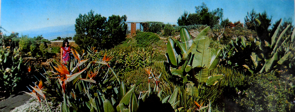 This Is One Of The First Post Cards Of The Kula Botanical Gardens From The  1970u0027s. It Certainly Has Changed.
