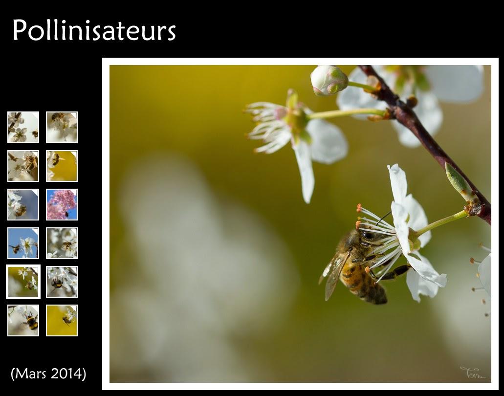 http://instantalautre.free.fr/galeries/macro/abeilles/