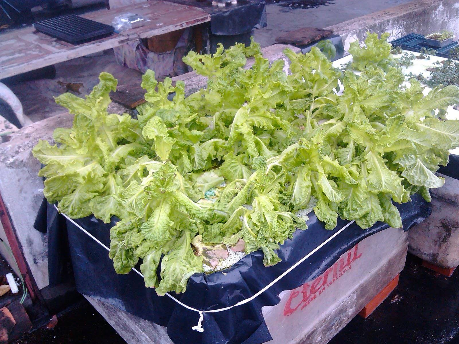 Hidroponia y horticultura en casa mayo 2013 for Imagenes de hidroponia