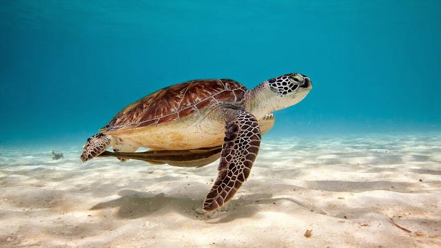 Imagenes de Tortugas en la playa
