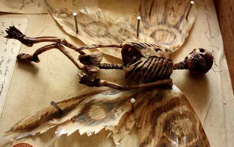 Παράξενα πλάσματα βρέθηκαν σε αρχοντικό στο Λονδίνο [φωτό]