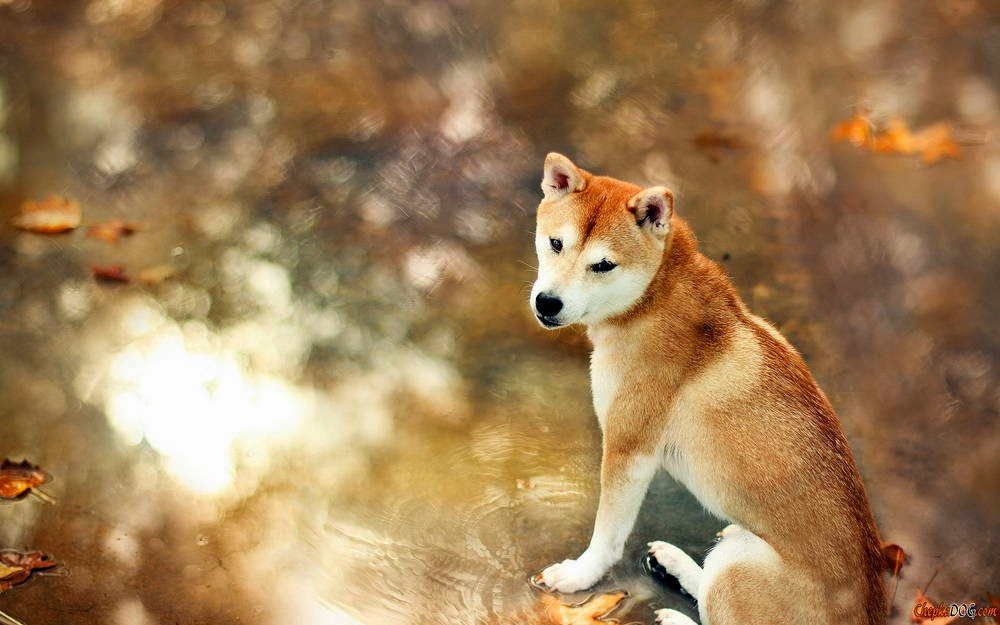 imagenes de perros feos