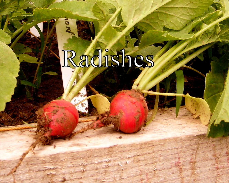 Maple Grove: Lush and Green Kitchen Garden