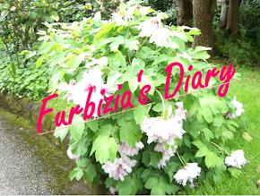 Daily Posts: Furbizia's Diary