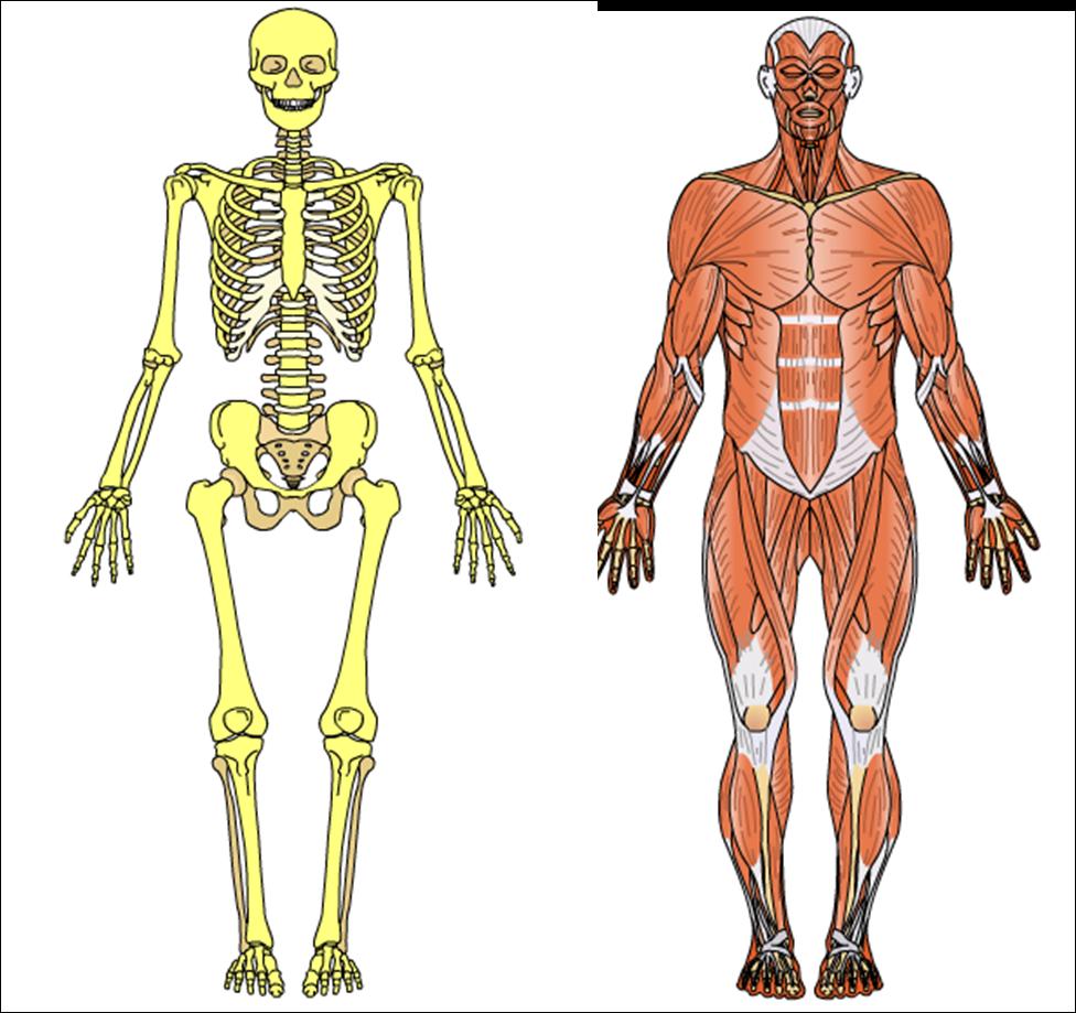 Educación Física y Deporte Carmelitas: Anatomy Arcade