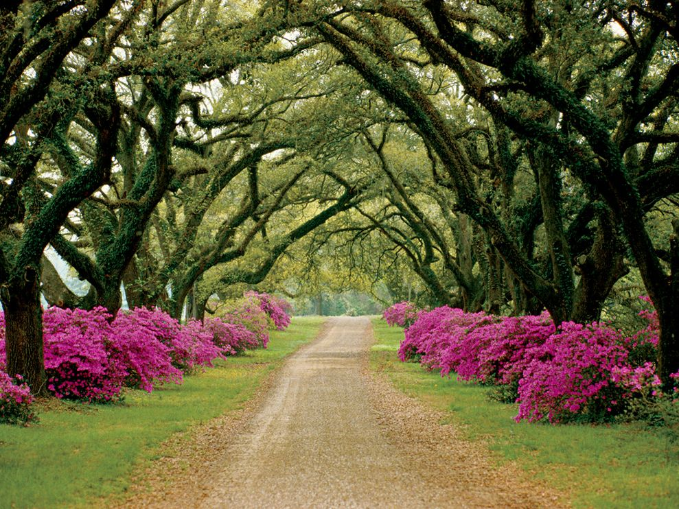 Beautiful Pathway Lined with Trees