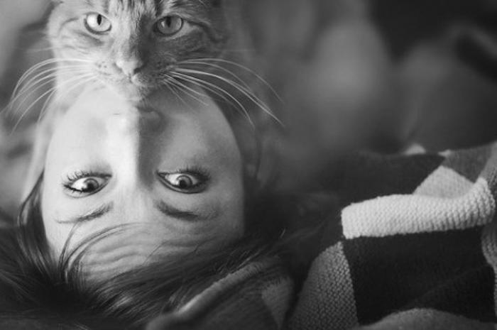 Фото 4 из Catmoji - социальная сеть для котов