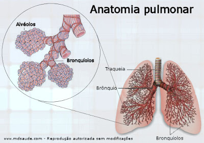 Bronquiolite - Bronquíolos