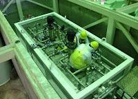 Installazione delle pompe per il sistema di decontaminazione Kurion