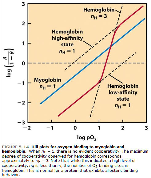 principles of biochemistry test bank pdf