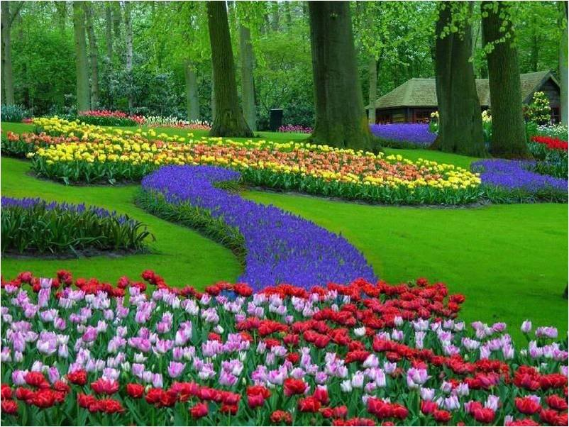 flores no jardim frases : flores no jardim frases:frases,mensagens e poesias: Frase do dia