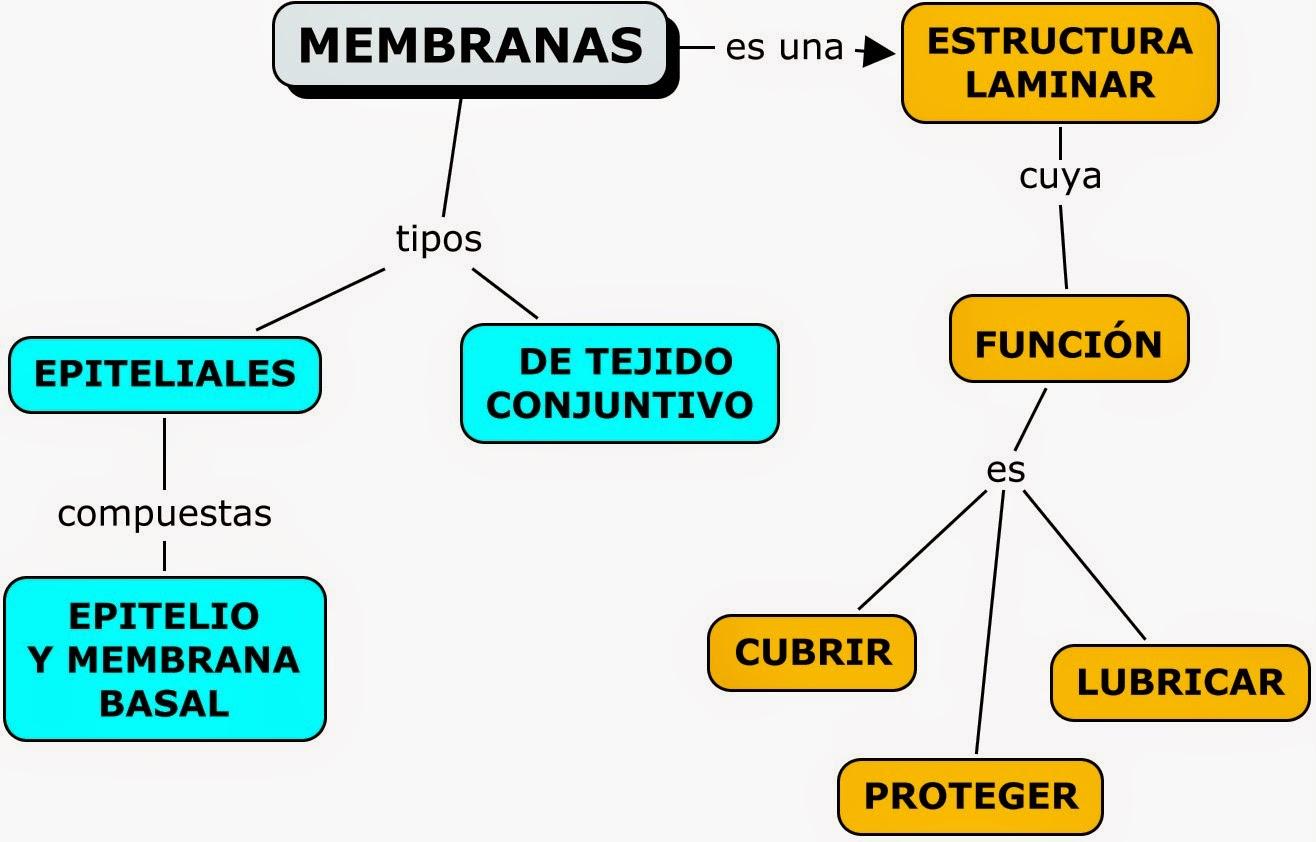 MAPAS CONCEPTUALES SOBRE LA PIEL (SISTEMA TEGUMENTARIO) | MAPAS ...