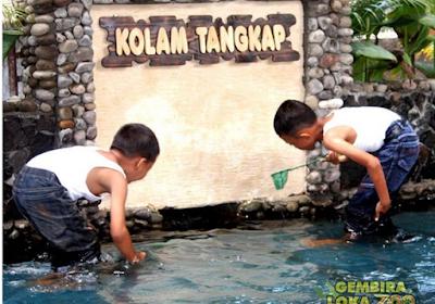 menangkap ikan di kolam tangkap  kebun binatang gembira loka yogya