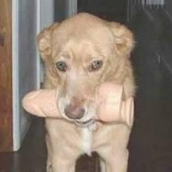 Imagens engraçadas com cachorros