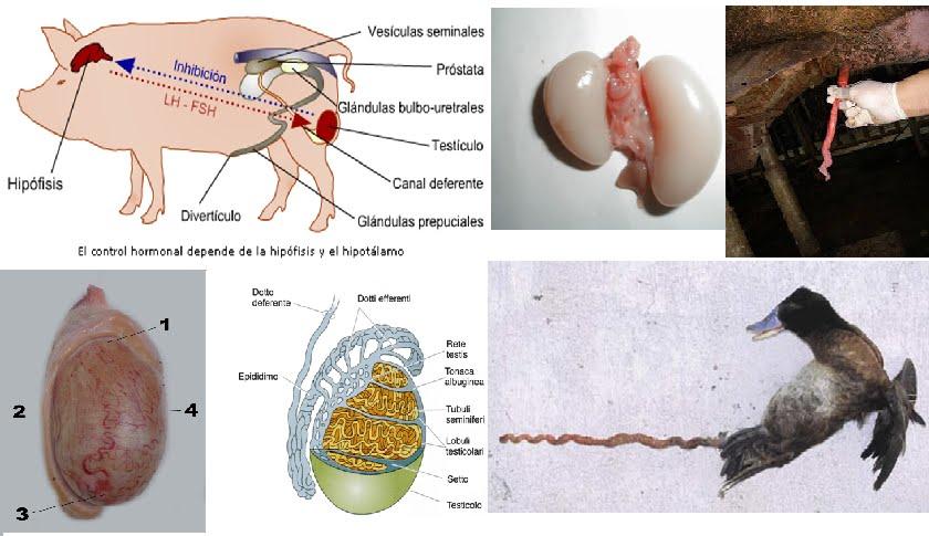 anatomia y fisiologia animal