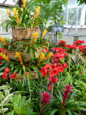 Amaryllis and bromeliads Allan Gardens Conservatory Christmas Flower Show 2015  by garden muses-not another Toronto gardening blog