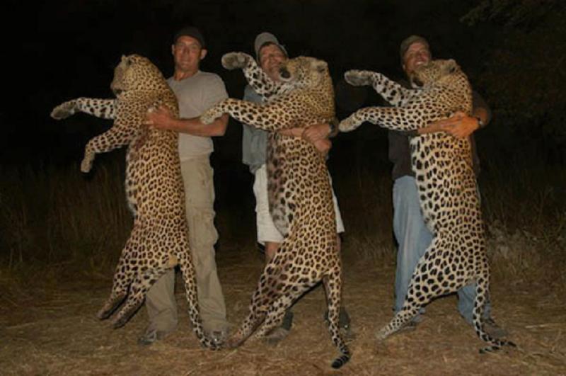 felinos de la selva: