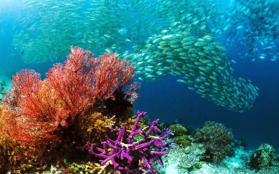 Keindahan Pemandangan Bawah Laut Raja Ampat Yang Menakjubkan