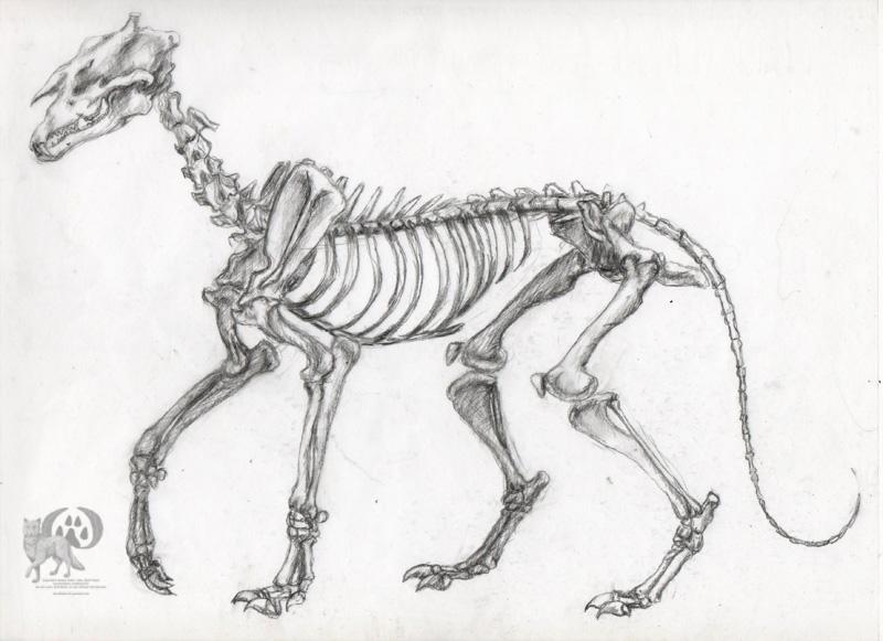 Danea Fidler Illustrations: Animal Anatomy Creature Update