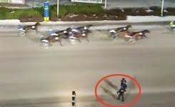 Racehorse runs over photographer