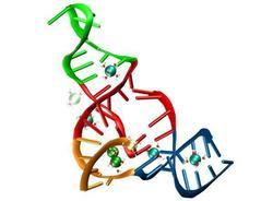 Mundo de ARN