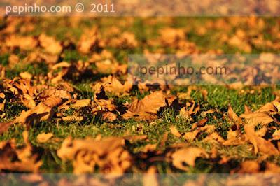 hojas de Bonaval