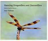 Dancing Dragonflies and Damselflies