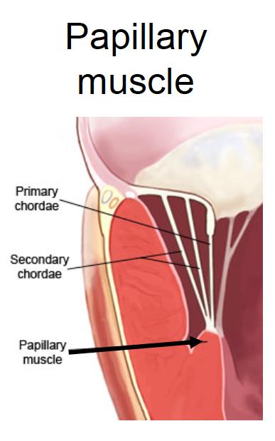 biology journal: december 2012, Human Body