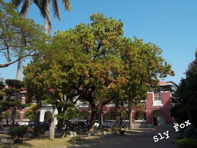 台南公園國小茄苳樹