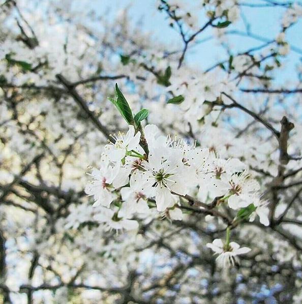Træerne på Instagram