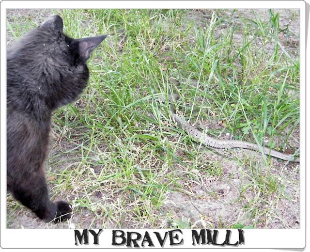 snake-milli.jpg