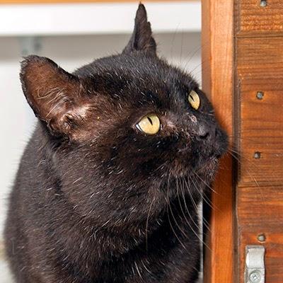 Give an FIV cat a chance!