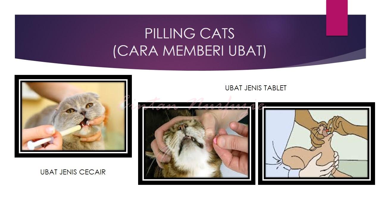 cara bagi kucing makan ubat veterinar kucing sakit cara bagi kucing makan ubat