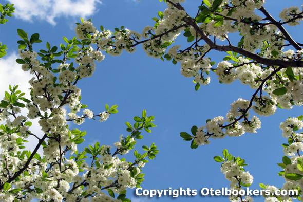 Spring_in_Belarus_41