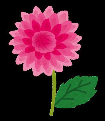 赤いダリアのイラスト(花)