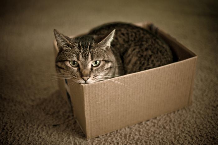 cat entertainment screen