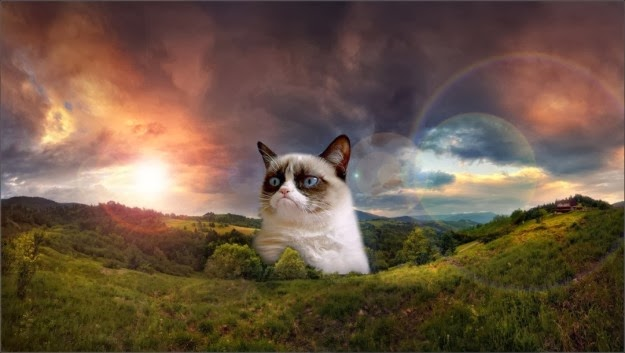 Beautiful Grumpy Cat Wallpaper Created By Some Unknown Genius
