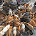 Pulau 'Kucing' di Jepun
