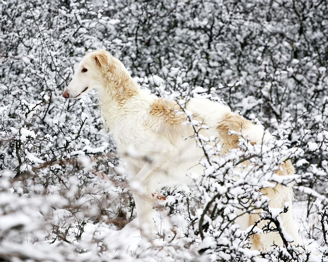 bayer leverkusen logo png Hintergrundbild ( 1280 x 975  - Hintergrundbilder Kostenlos Hunde