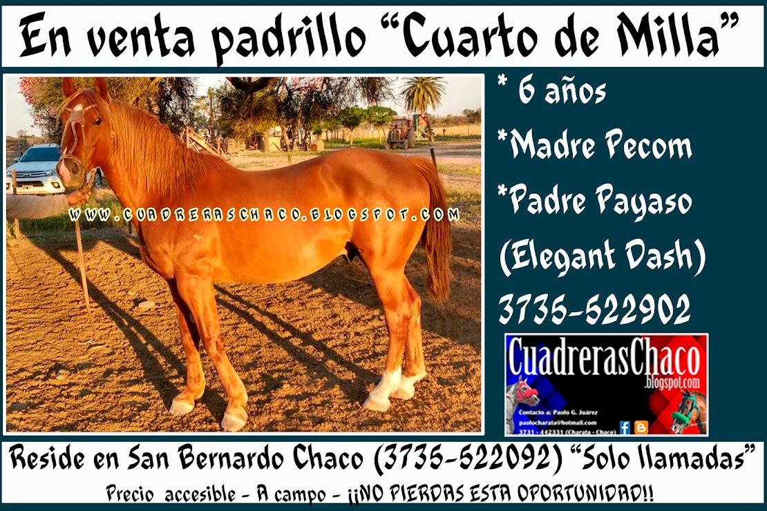 venta PAADRILLO 1-9-16