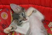 Doe ração para um gatinho