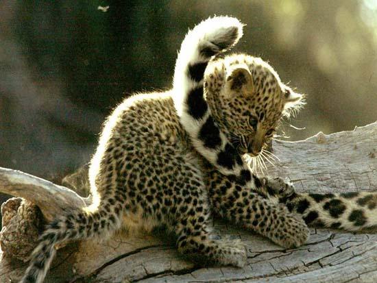buaya menetas foto bayi cheetah dan induknya foto bayi gajah lucu