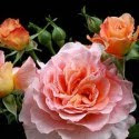 roses for brides bouquet