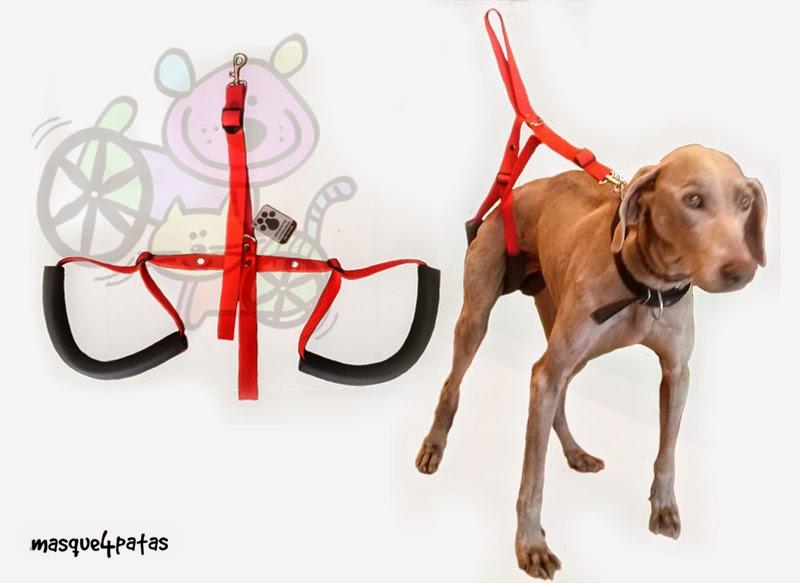 arnes para perros uruguay