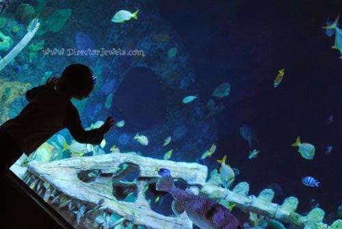 director jewels kansas city sea life aquarium legoland discovery center ticket giveaway. Black Bedroom Furniture Sets. Home Design Ideas
