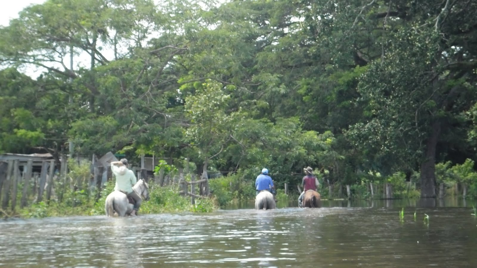 en verano el llanero trata de llevar el ganado a sitios mas húmedos con pasto fresco; en invierno, debe igualmente sacarlo de los hatos pues se les